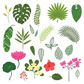 Set of stylized tropical plants, leaves and flowers.