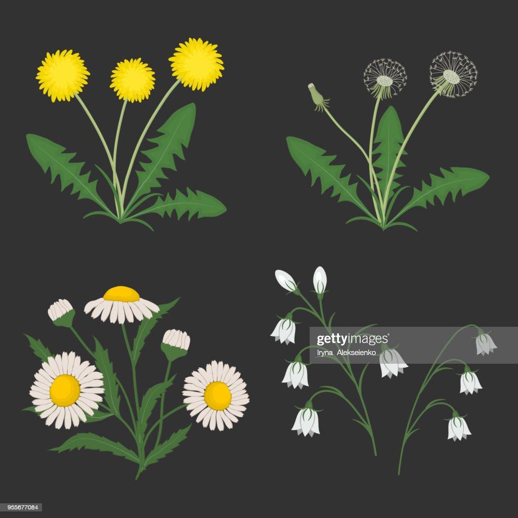 Set of summer flowers on a dark gray background