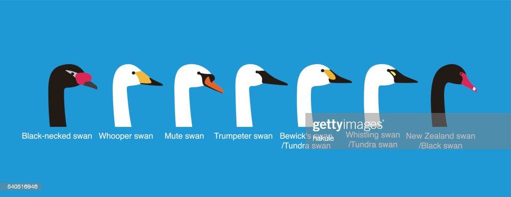 set of swan head vector icons, vecor illustration