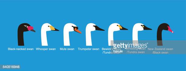 set of swan head vector icons, vecor illustration