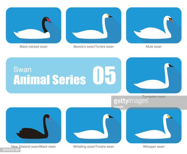 set of swan vector icons, vecor illustration