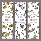 Set of three color labels with mountain arnica, cornflower and daisy sketch.