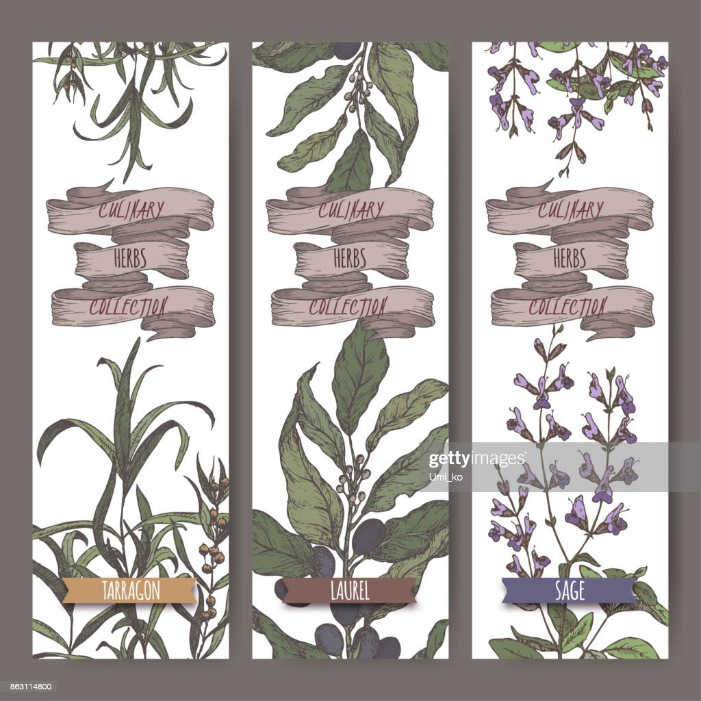 Set of three color vector banners with tarragon, sage, laurel.