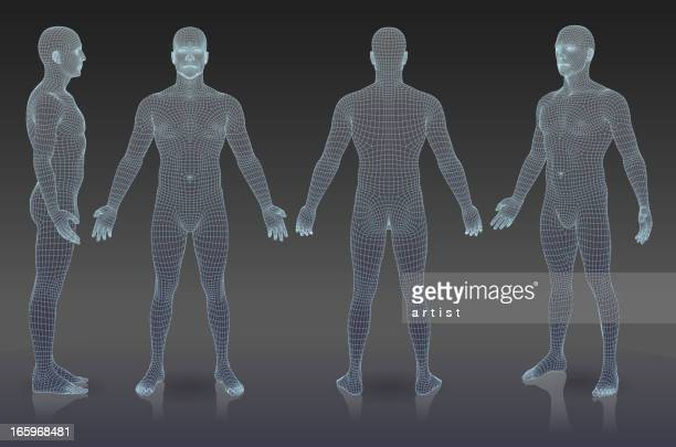 set of three dimensional people. - anatomy stock illustrations