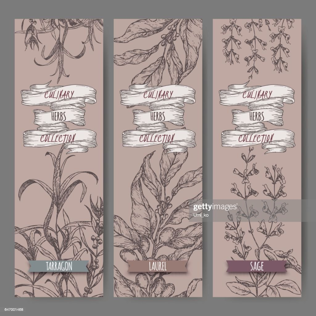 Set of three vector banners with tarragon, sage, laurel.