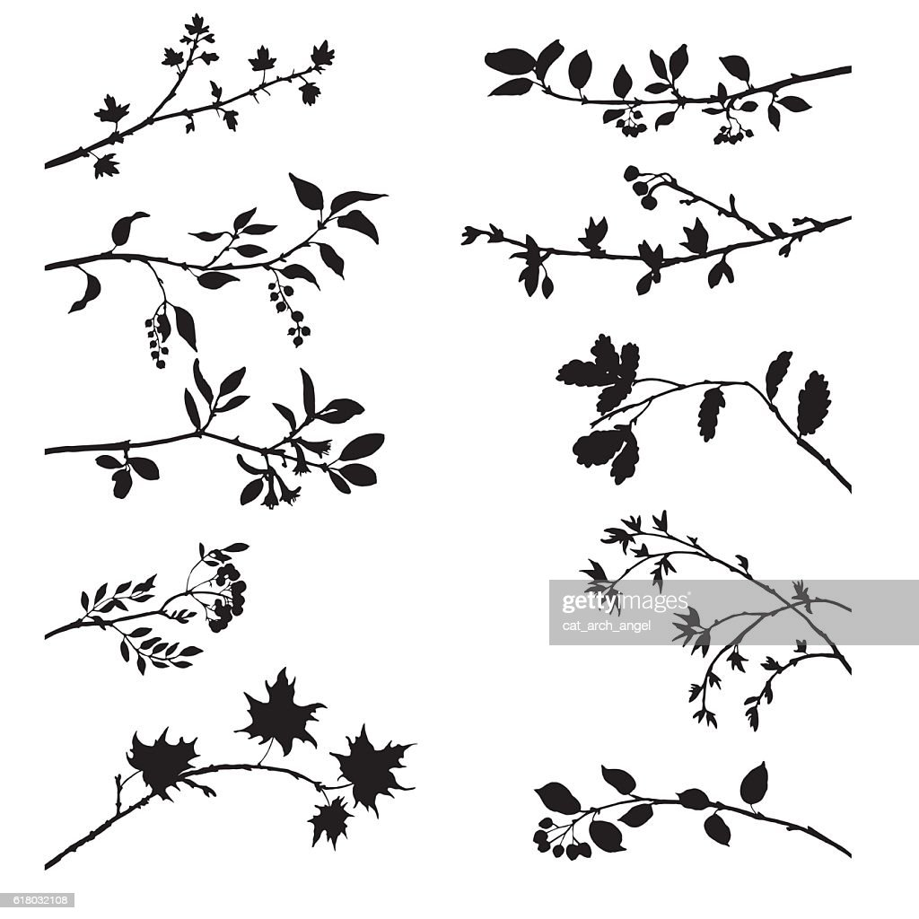 set of tree branches with leaves and berries