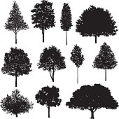 Set Of Tree Drawings