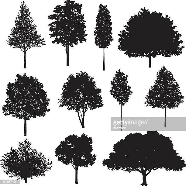 set of tree drawings - coniferous tree stock illustrations, clip art, cartoons, & icons