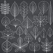 Set of tree leaves on chalkboard background