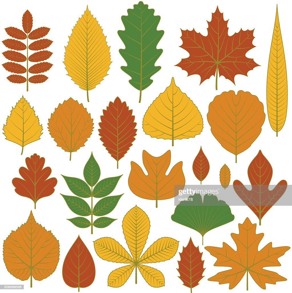 Set of tree leaves. Twenty different icons