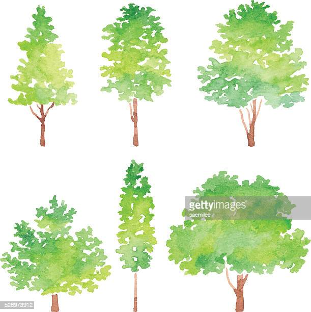 set of trees watercolor - deciduous tree stock illustrations, clip art, cartoons, & icons