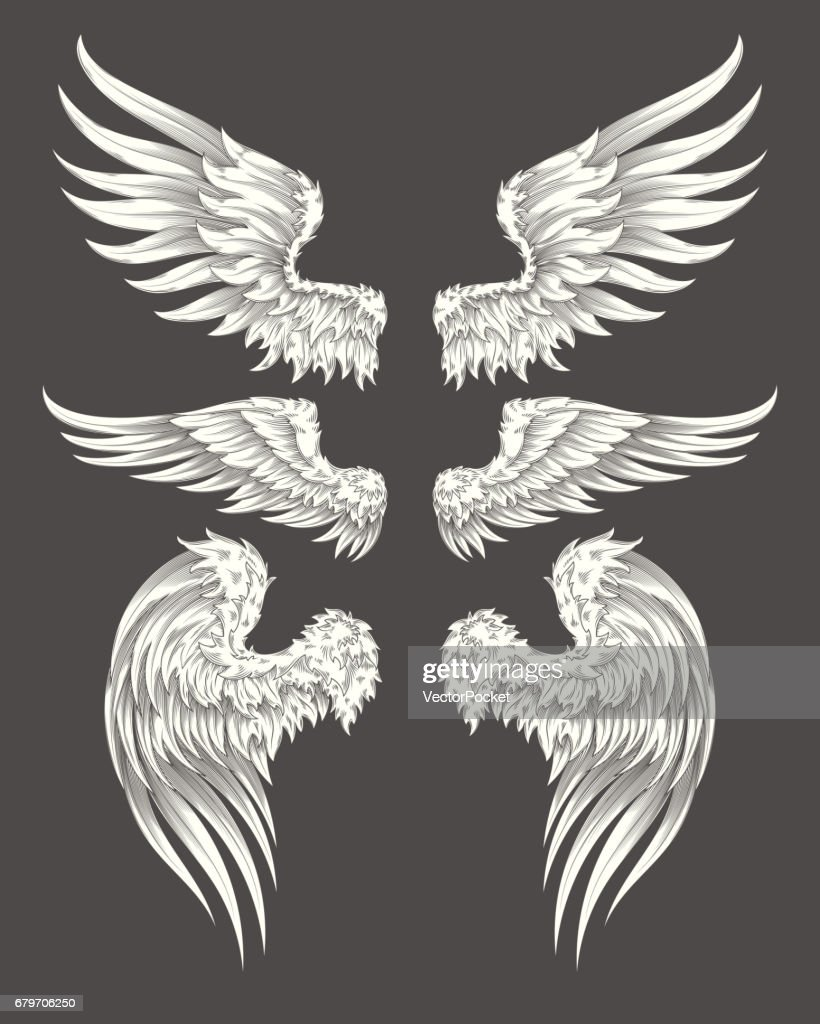 Set of vector angelic or bird wings
