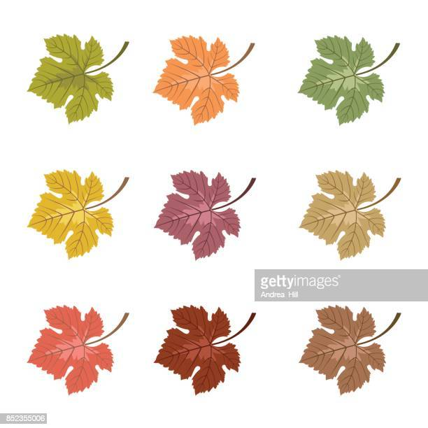 423 Grape Leaf High Res Illustrations Getty Images