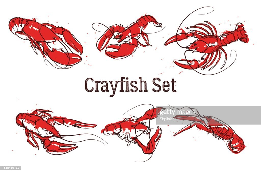 Set of vector crayfish illustrations drawn in ink. Splattered seafood concept on white background.