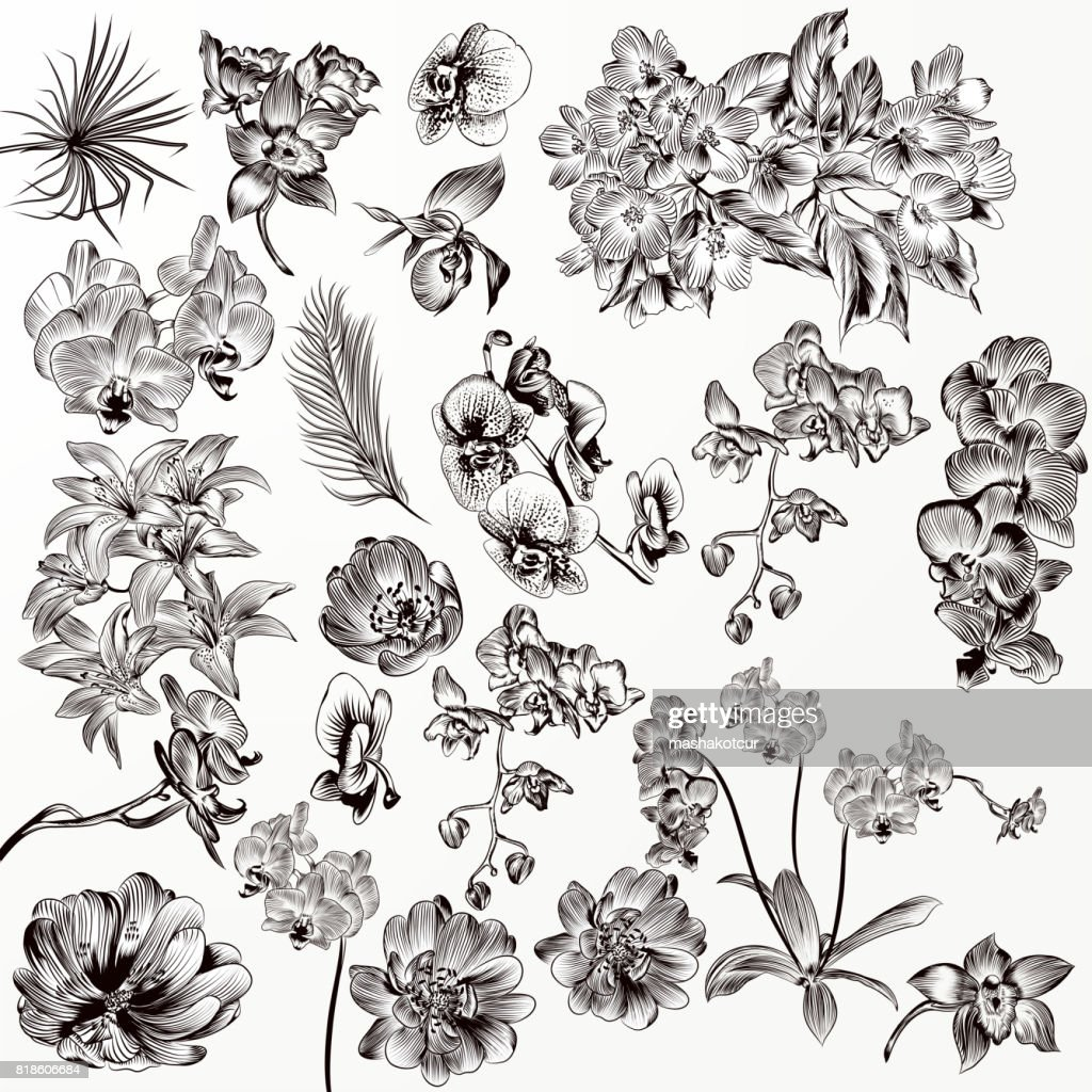 Set of vector detailed orchid flowers