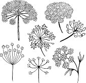 Set of vector different types of inflorescence, isolated on white.