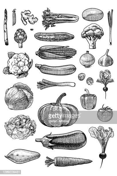 set of vector drawings of vegetables - marrom stock illustrations