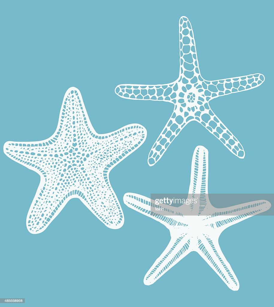set of vector hand-drawn starfishes