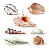 Set of vector illustrations seashells of various kinds in realistic style