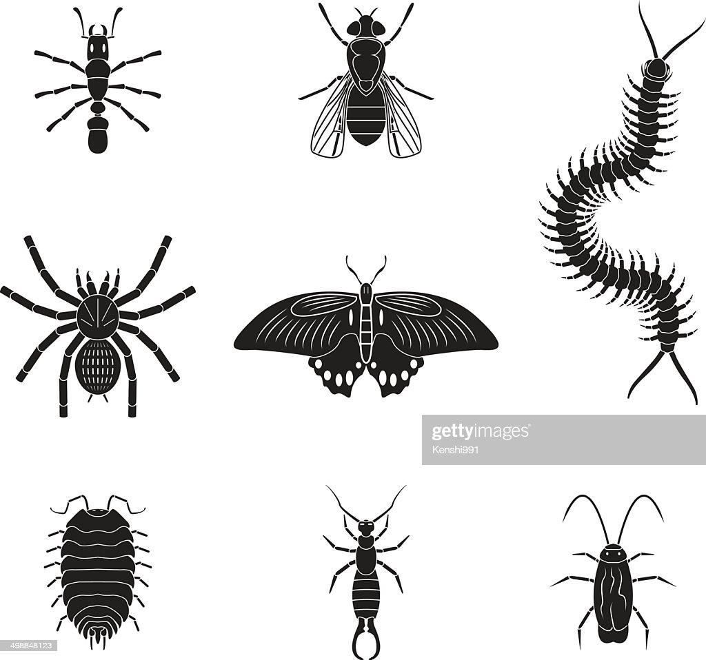 Set of vector insects volume 2