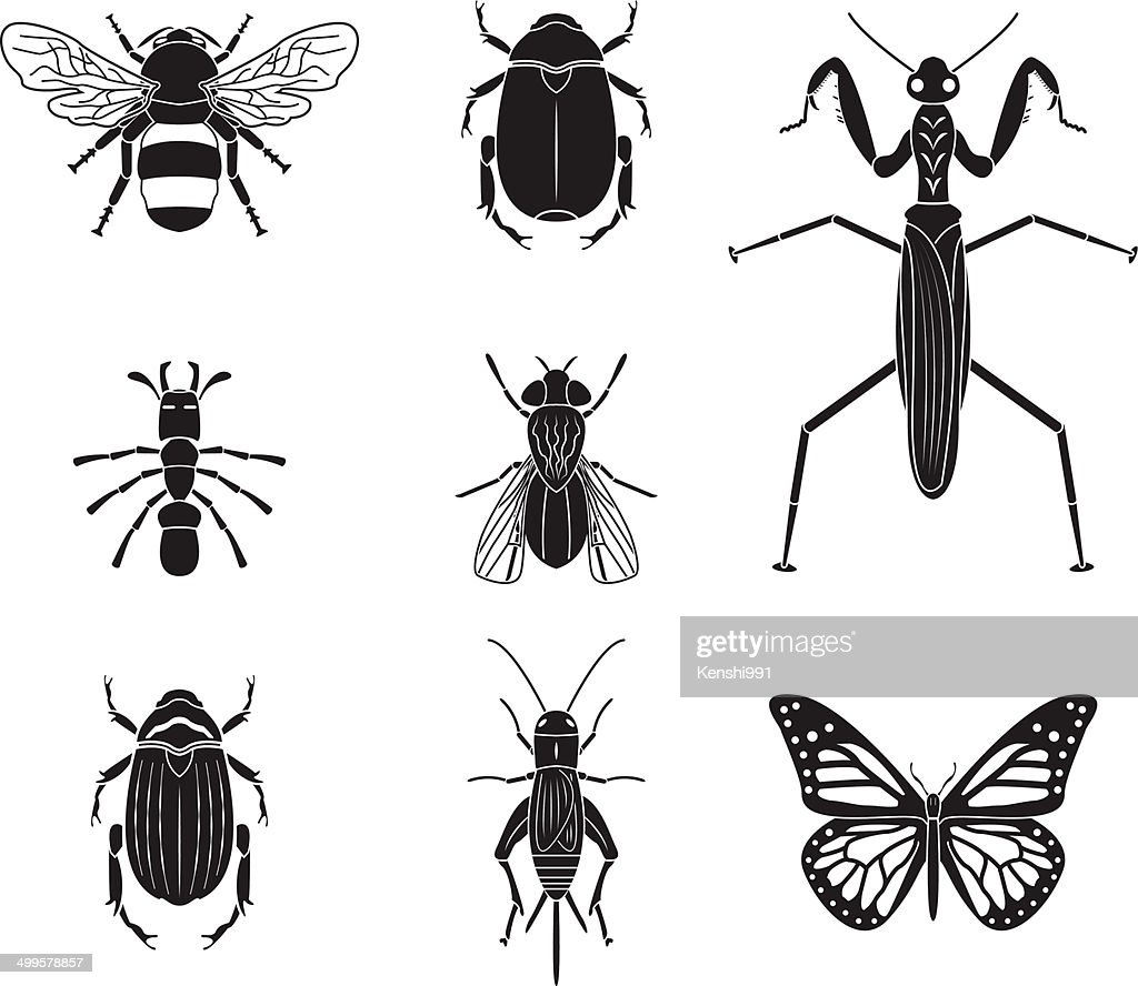 Set of vector insects volume 4