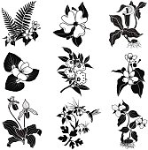 set of vector woodland flowers in black and white
