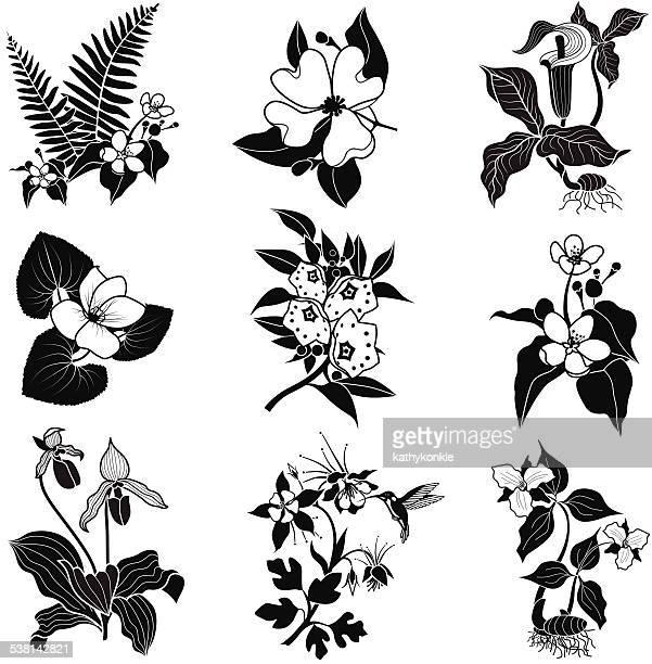 ilustrações, clipart, desenhos animados e ícones de conjunto de vetor de woodland flores em preto e branco - mel do louro da montanha