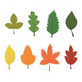 Set of vectorial autumn leaves. Vector texture for design. Colorful background in a flat style. Orange, yellow, red, green.
