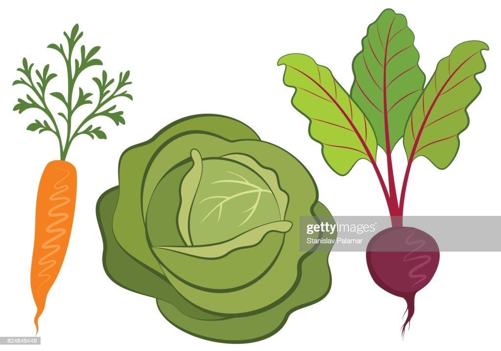 Set of vegetables hand drawn illustrations.