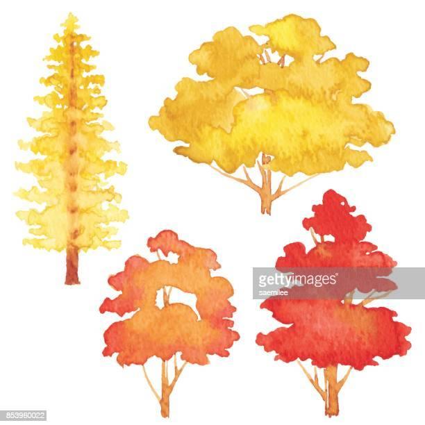 set of watercolor autumn trees - aspen tree stock illustrations