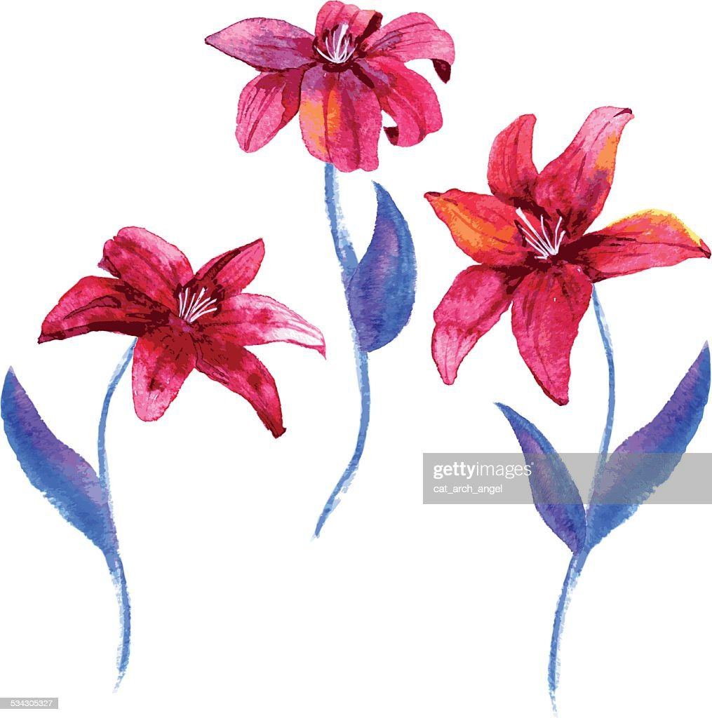 Set Of Watercolor Drawing Lily Flowers Vector Art Getty Images