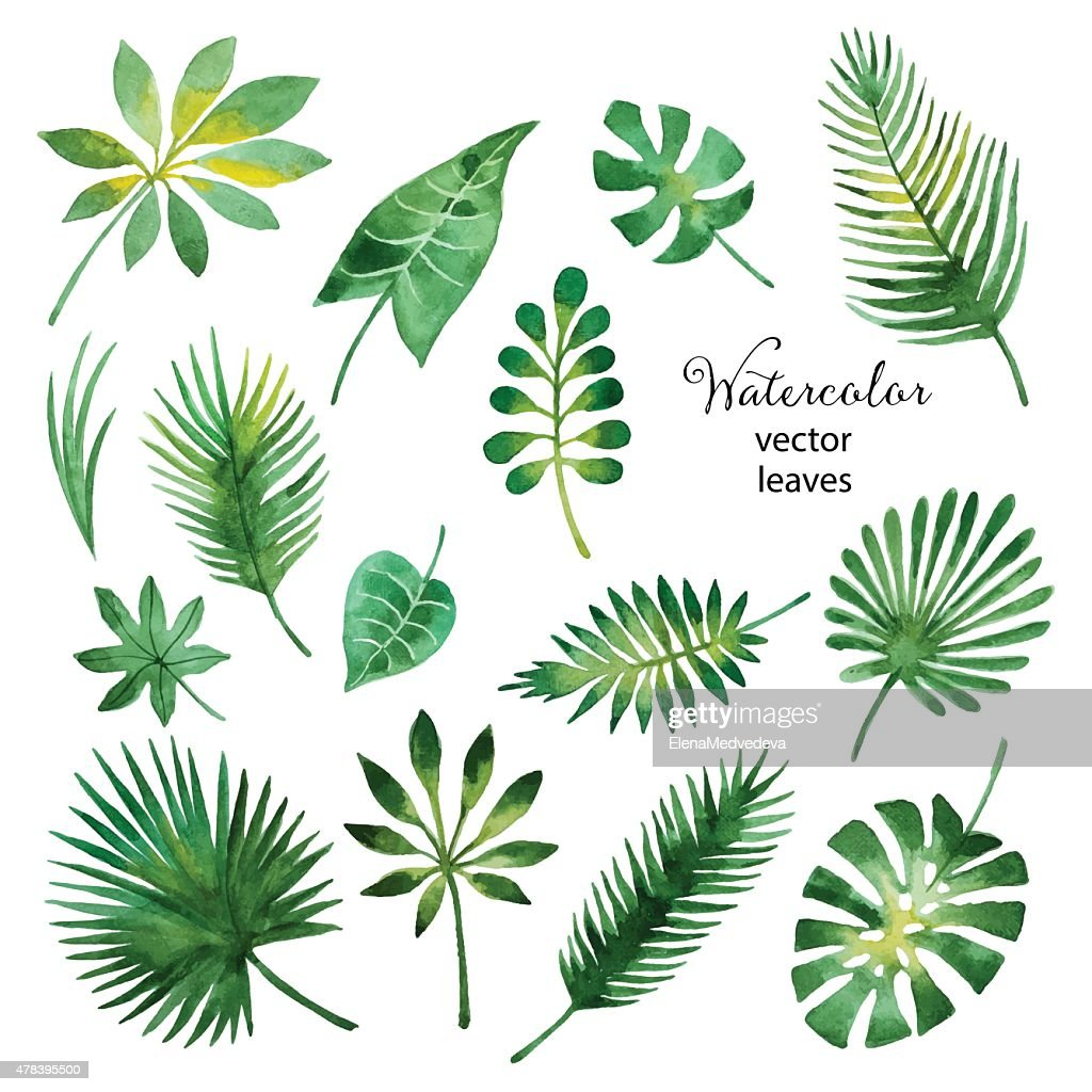 Set of watercolor green leaves