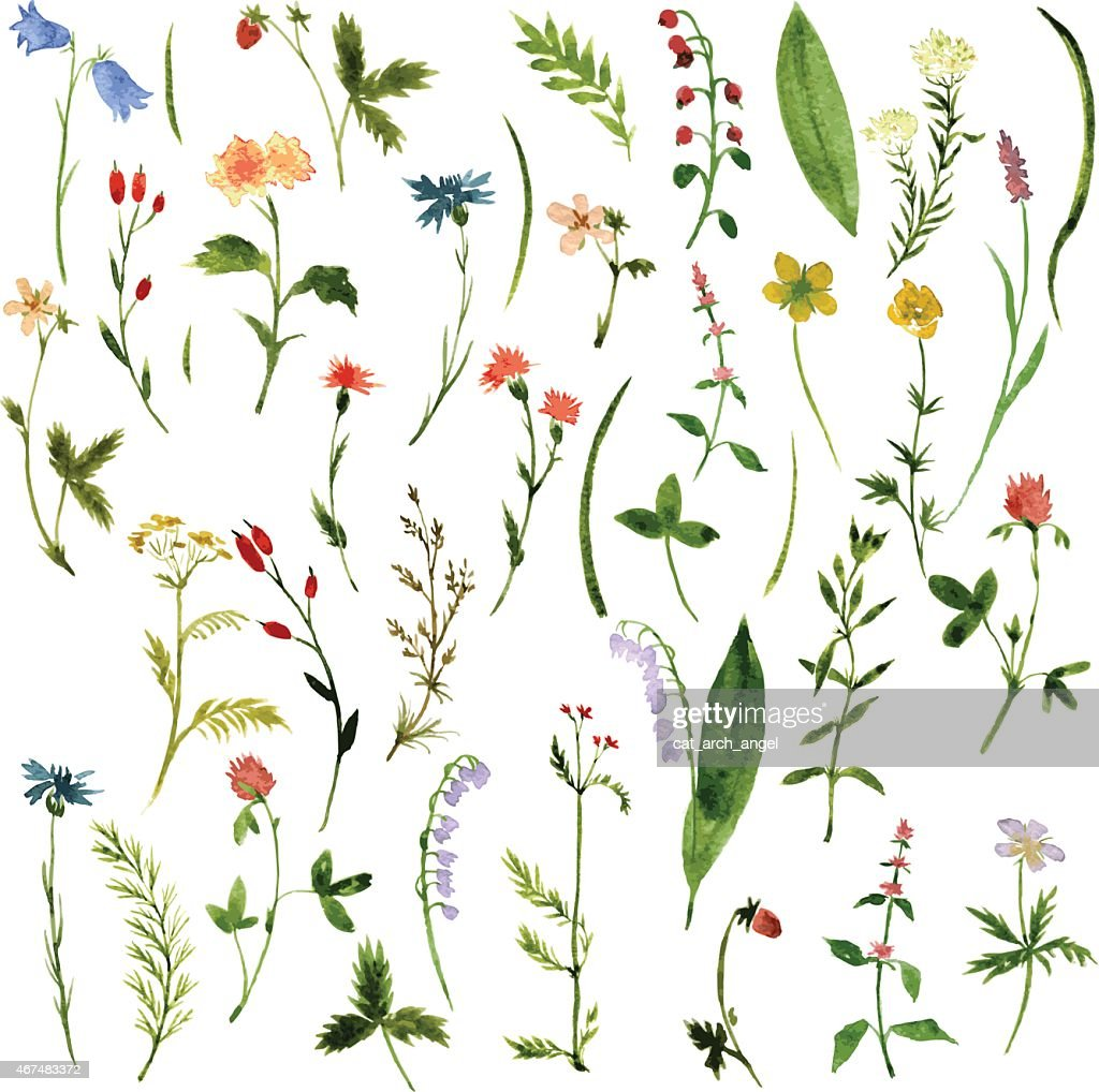 Set of watercolor illustrations of herbs and flowers