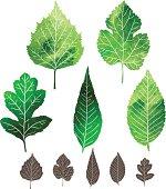 Set of watercolor leaves