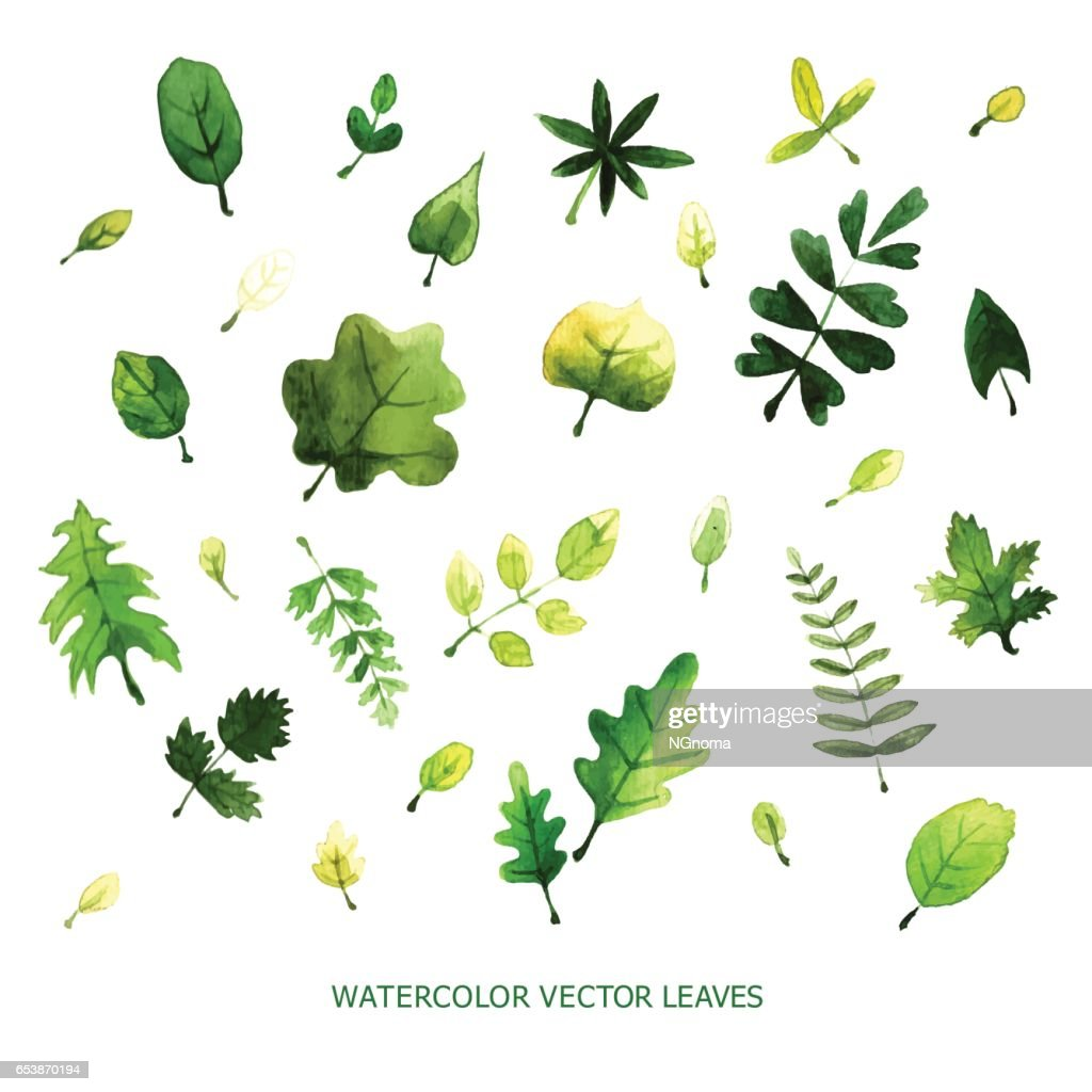 Set of watercolor vector leaves perfect floral elements for save the set of watercolor vector leaves perfect floral elements for save the date card wedding stopboris Image collections