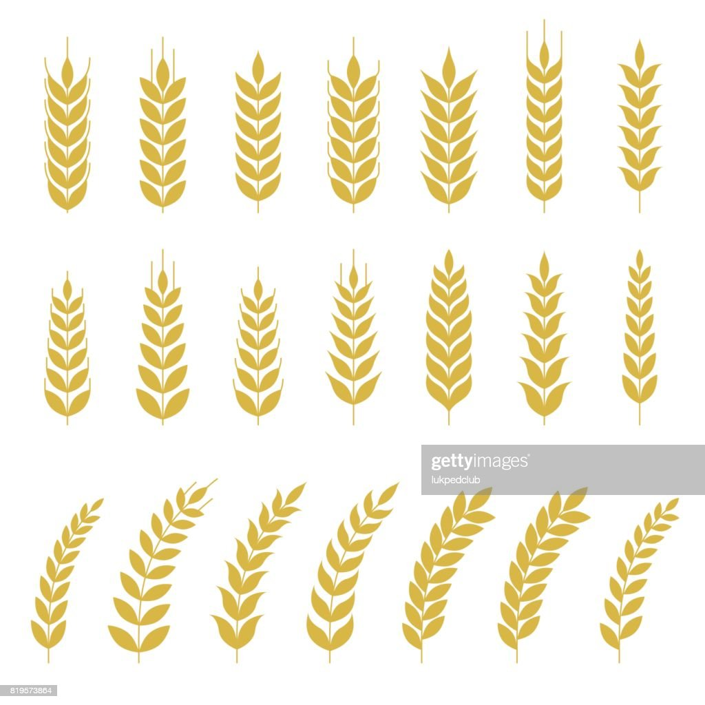 Set of Wheat or barley icon