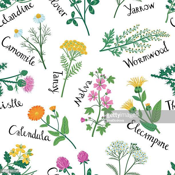 set of wild herbs are used in medicine. seamless pattern. - aromatherapy stock illustrations, clip art, cartoons, & icons