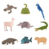 Set of wild south america animals, parrot and fish isolated on white background