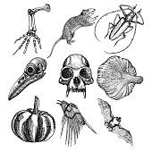 Set of witchcraft magic, occult attributes decorative elements. Monkey, bird skull skeleton hand, bug, beetle, insect, crow, rat, frog, bat, pumpkin, garlic. Set for Halloween. Vector.