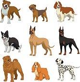 Set purebred dogs