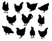 Set realistic silhouettes of hens and chickens - isolated vector on a white background