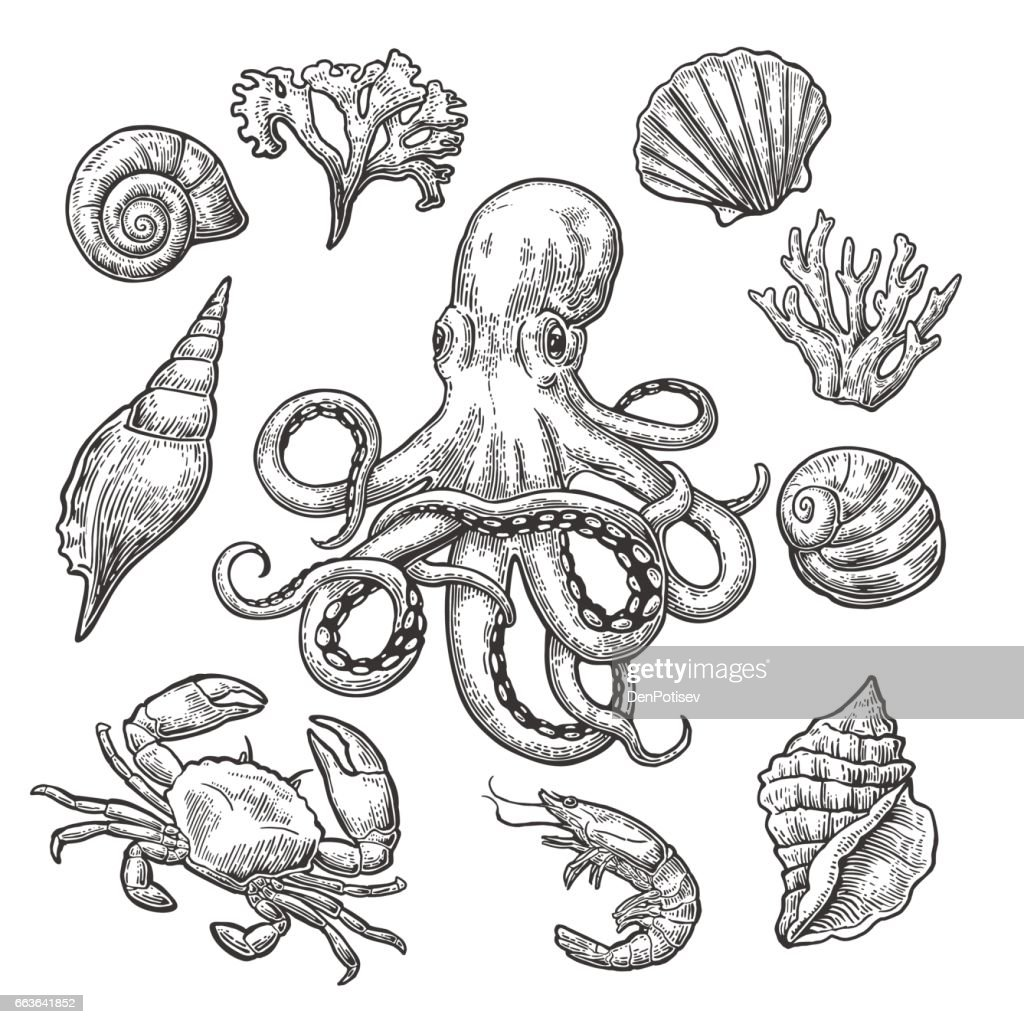 Set sea shell, coral, crab, shrimp and octopus.