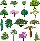 Set Sightly Trees