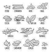 Set spices. Vintage vector engraved illustration.