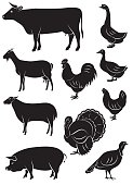 set vector icons with farm animals and birds