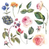 Set vintage vector elements of English roses