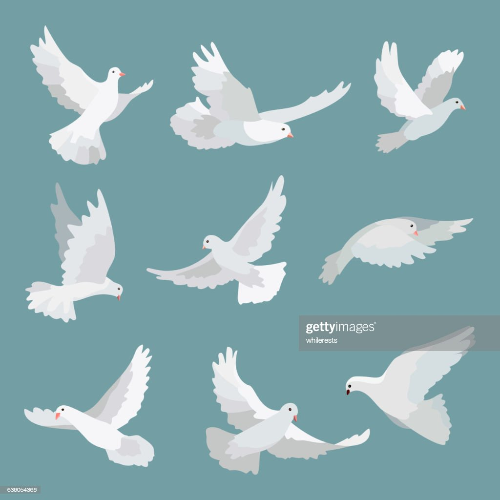Set white doves peace isolated on background. Vector bird illustration.
