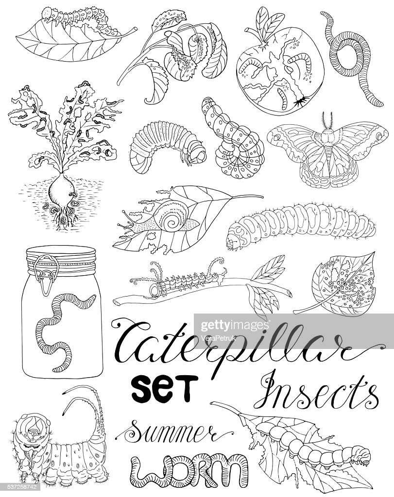 Set with caterpillars, larvas and worms