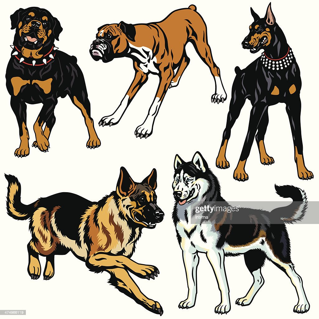 set with dog breeds