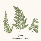 Set with ferns.